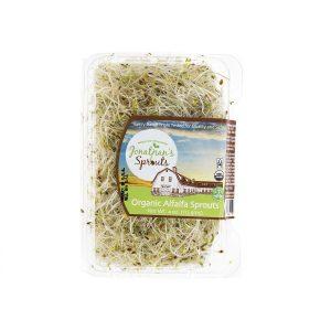 organic alfalfa sprouts